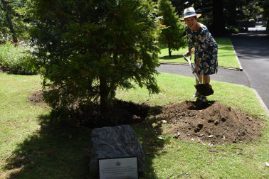 an image of Dame Patsy planting a kawaka to mark the 50th anniversary of the Grounds Committee