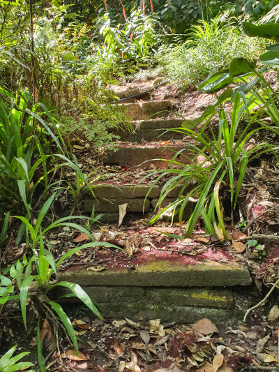 Image of old stairs in the Government House grounds