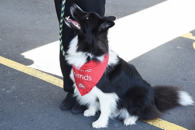 Image of Jack the Border Collie