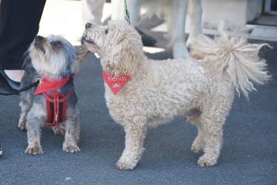 Image of dogs Jack and Charlie