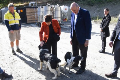 Image of Dame Patsy and Sir David being greeted by dogs, Monty and Poppy