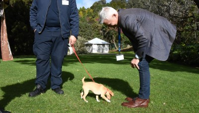Coco exploring the great outdoors at Government House Auckland