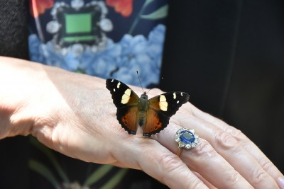 Image of a Yellow Admiral butterfly