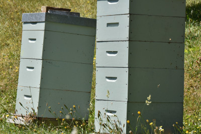 Image of two beehives in the grass
