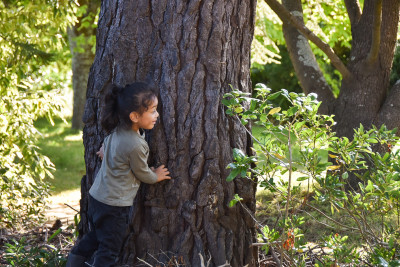 Child playing hide and seek behind a tree
