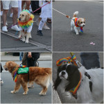 Dogs showing support at the Pride Parade